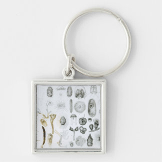 Protozoa and Coelenterata Key Ring