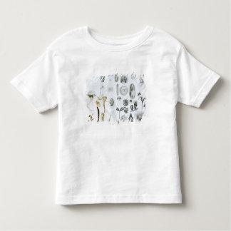 Protozoa and Coelenterata Toddler T-Shirt