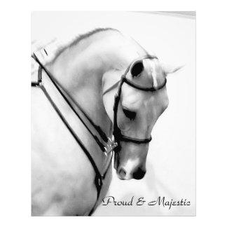 Proud and Majestic Arabian Horse 8 X 10 Print Photo Print