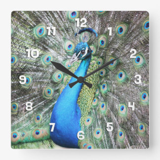 Proud as a Peacock Square Wall Clock