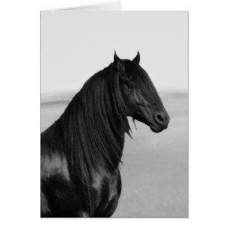 Proud Friesian black stallion horse Greeting Cards
