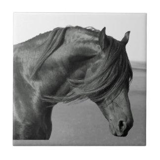 Proud Friesian black stallion horse Tile