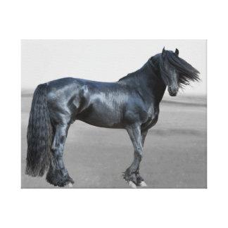 Proud Friesian black stallion Stretched Canvas Prints