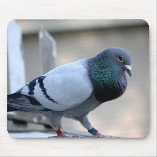 Proud Homing Pigeon Mousepad