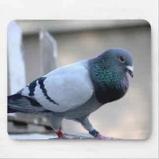 Proud Homing Pigeon Mousepad