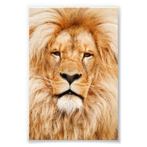 Proud Lion Portrait Photo Art