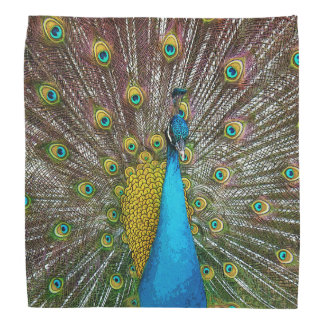 Proud Peacock Bird with Royal Plumage Bandannas