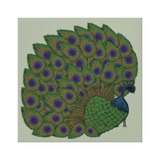 Proud Peacock Canvas Print