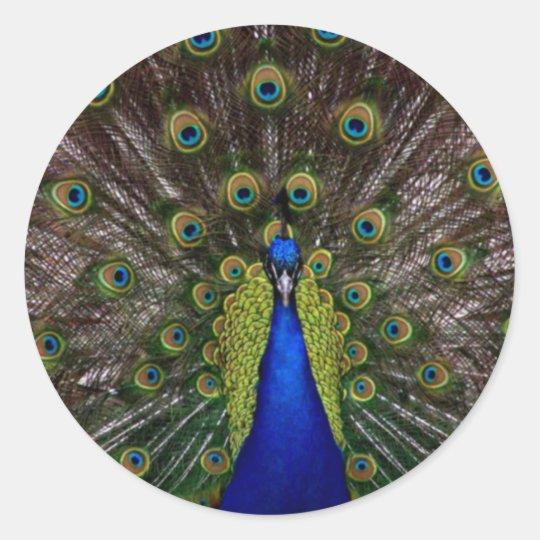 Proud Peacock Classic Round Sticker