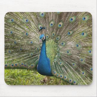 Proud Peacock Mouse Mat