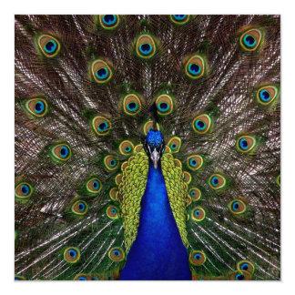 Proud Peacock Multi Purpose Invitation