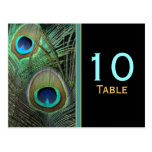 Proud Peacock Table Number Postcard