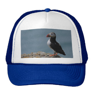 Proud Puffin Hat