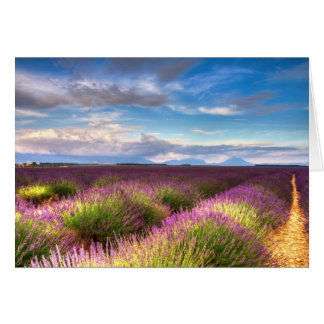 Provence - Lavender fields greeting card