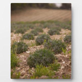 Provence Plaque