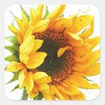Provincetown Sunflower Stickers