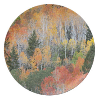 Provo River and aspen trees 11 Dinner Plates
