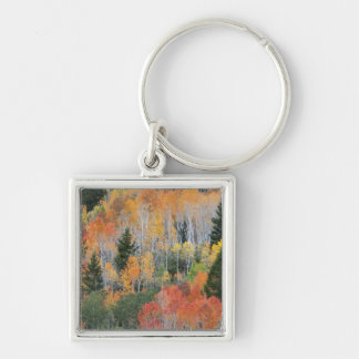 Provo River and aspen trees 11 Key Ring