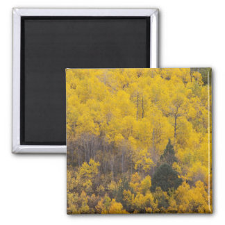 Provo River and aspen trees 12 Magnet