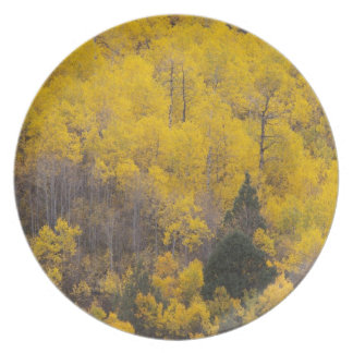 Provo River and aspen trees 12 Plate