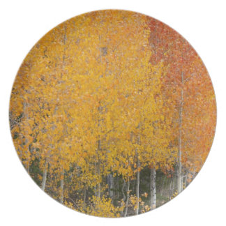 Provo River and aspen trees 13 Dinner Plate