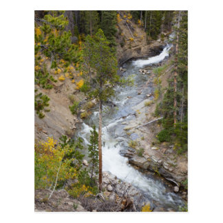 Provo River and aspen trees 14 Postcard