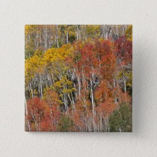 Provo River and aspen trees 15 15 Cm Square Badge