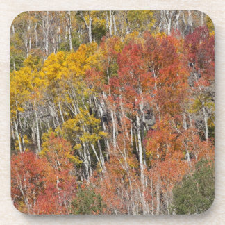 Provo River and aspen trees 15 Coaster