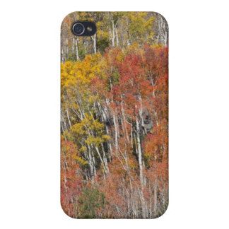 Provo River and aspen trees 15 Cover For iPhone 4