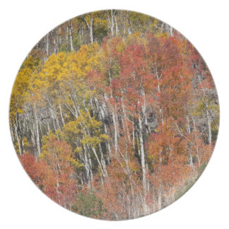 Provo River and aspen trees 15 Dinner Plate