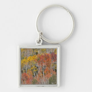 Provo River and aspen trees 15 Key Ring