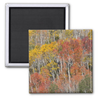 Provo River and aspen trees 15 Magnet