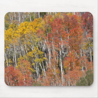 Provo River and aspen trees 15 Mouse Mat