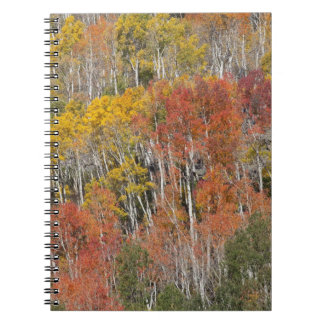 Provo River and aspen trees 15 Notebook