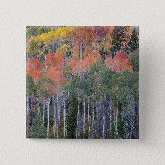 Provo River and aspen trees 16 15 Cm Square Badge