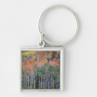 Provo River and aspen trees 16 Key Ring