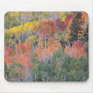 Provo River and aspen trees 16 Mouse Mat