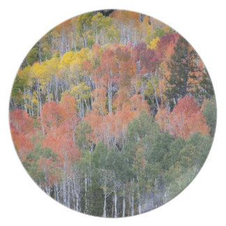 Provo River and aspen trees 16 Plate