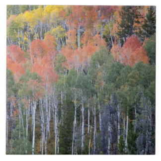 Provo River and aspen trees 16 Tile