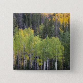 Provo River and aspen trees 2 15 Cm Square Badge