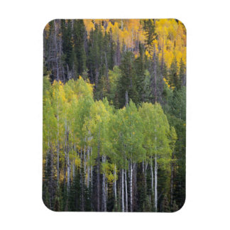 Provo River and aspen trees 2 Magnet