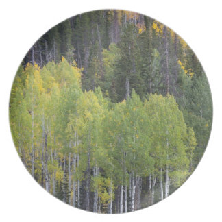 Provo River and aspen trees 2 Plate