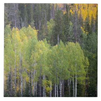 Provo River and aspen trees 2 Tile