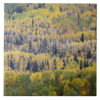Provo River and aspen trees 3 Tile
