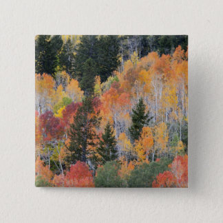 Provo River and aspen trees 4 15 Cm Square Badge