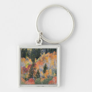 Provo River and aspen trees 4 Key Ring