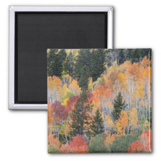 Provo River and aspen trees 4 Magnet