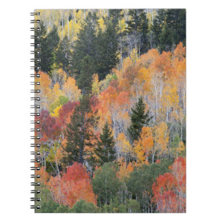 Provo River and aspen trees 4 Notebook