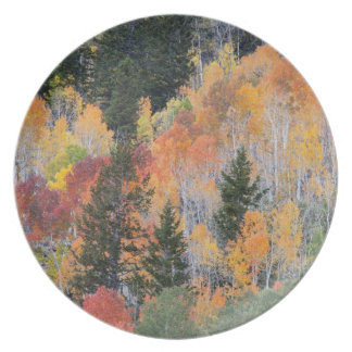 Provo River and aspen trees 4 Plate