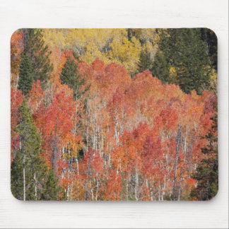 Provo River and aspen trees 6 Mouse Mat